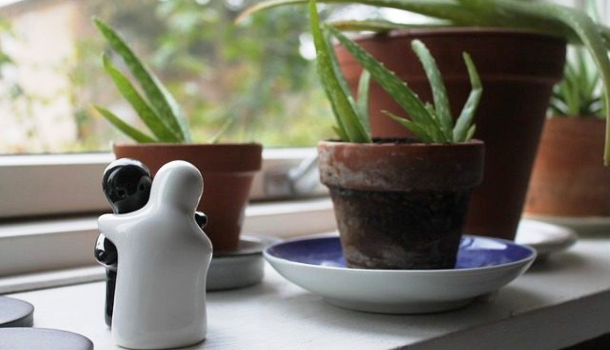 11 Plants That Create Positive Energy in Your Home