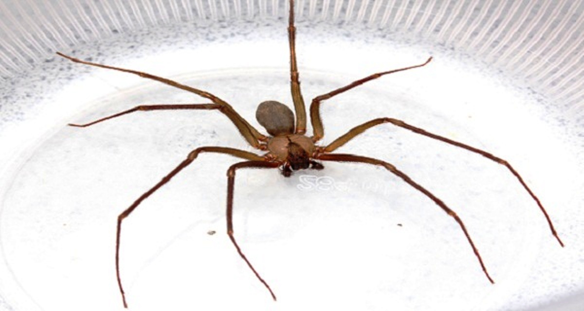 You Will Never Again See Spiders And Other Insects If You Have This Plant In Your Home