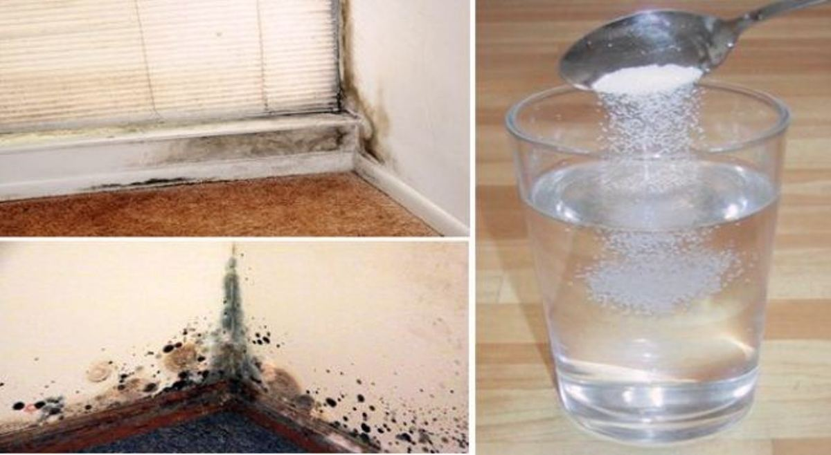5 Natural Solutions To Get Rid Of Mold From Your Home Safely And Permanently